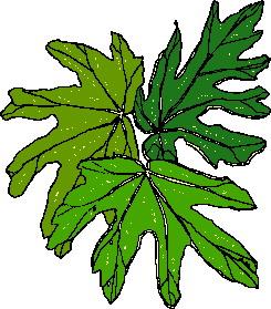 yaprak-hareketli-resim-0030