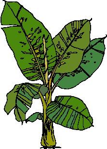yaprak-hareketli-resim-0142