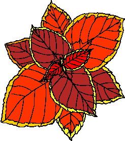 yaprak-hareketli-resim-0165