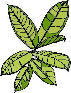 yaprak-hareketli-resim-0211