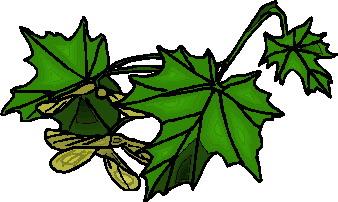 yaprak-hareketli-resim-0232