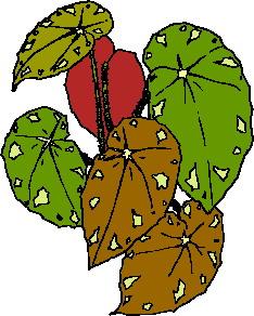 yaprak-hareketli-resim-0236