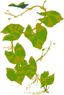 yaprak-hareketli-resim-0239