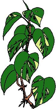 yaprak-hareketli-resim-0240
