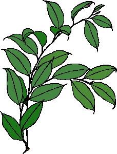 yaprak-hareketli-resim-0241