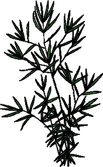yaprak-hareketli-resim-0246