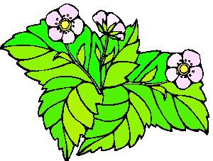 yaprak-hareketli-resim-0252