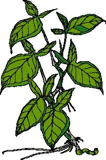 yaprak-hareketli-resim-0255