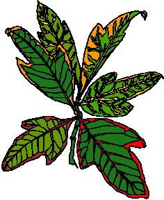 yaprak-hareketli-resim-0258