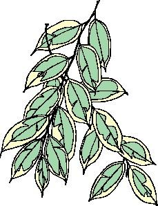 yaprak-hareketli-resim-0259