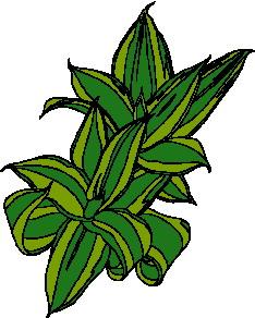 yaprak-hareketli-resim-0262