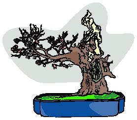 bonzai-agaci-hareketli-resim-0023