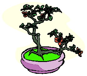 bonzai-agaci-hareketli-resim-0026