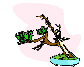 bonzai-agaci-hareketli-resim-0034