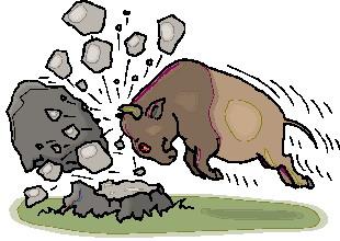 bufalo-hareketli-resim-0056