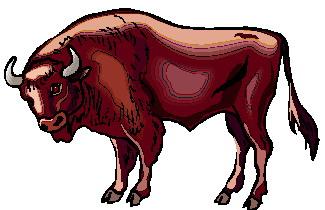 bufalo-hareketli-resim-0057