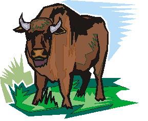bufalo-hareketli-resim-0059