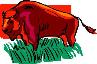 bufalo-hareketli-resim-0066