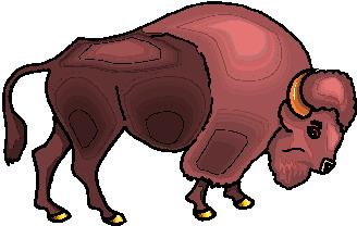 bufalo-hareketli-resim-0079