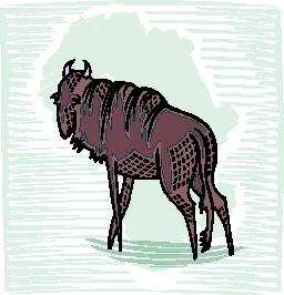 bufalo-hareketli-resim-0080