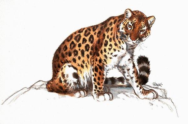 leopar-hareketli-resim-0017