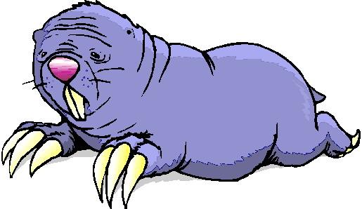 mors-ve-deniz-aygiri-hareketli-resim-0015