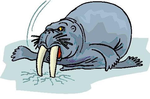 mors-ve-deniz-aygiri-hareketli-resim-0038