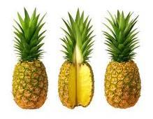 ananas-hareketli-resim-0014